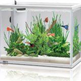 熱帯魚の飼育用品
